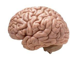 Neuroscience and Life Coaching